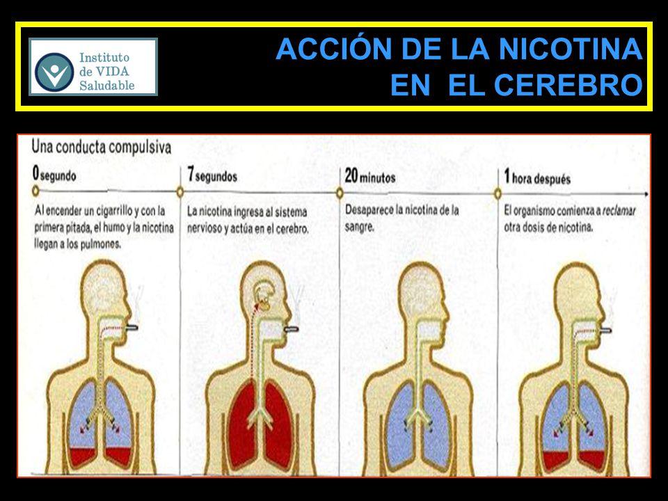 ACCIÓN DE LA NICOTINA EN EL CEREBRO