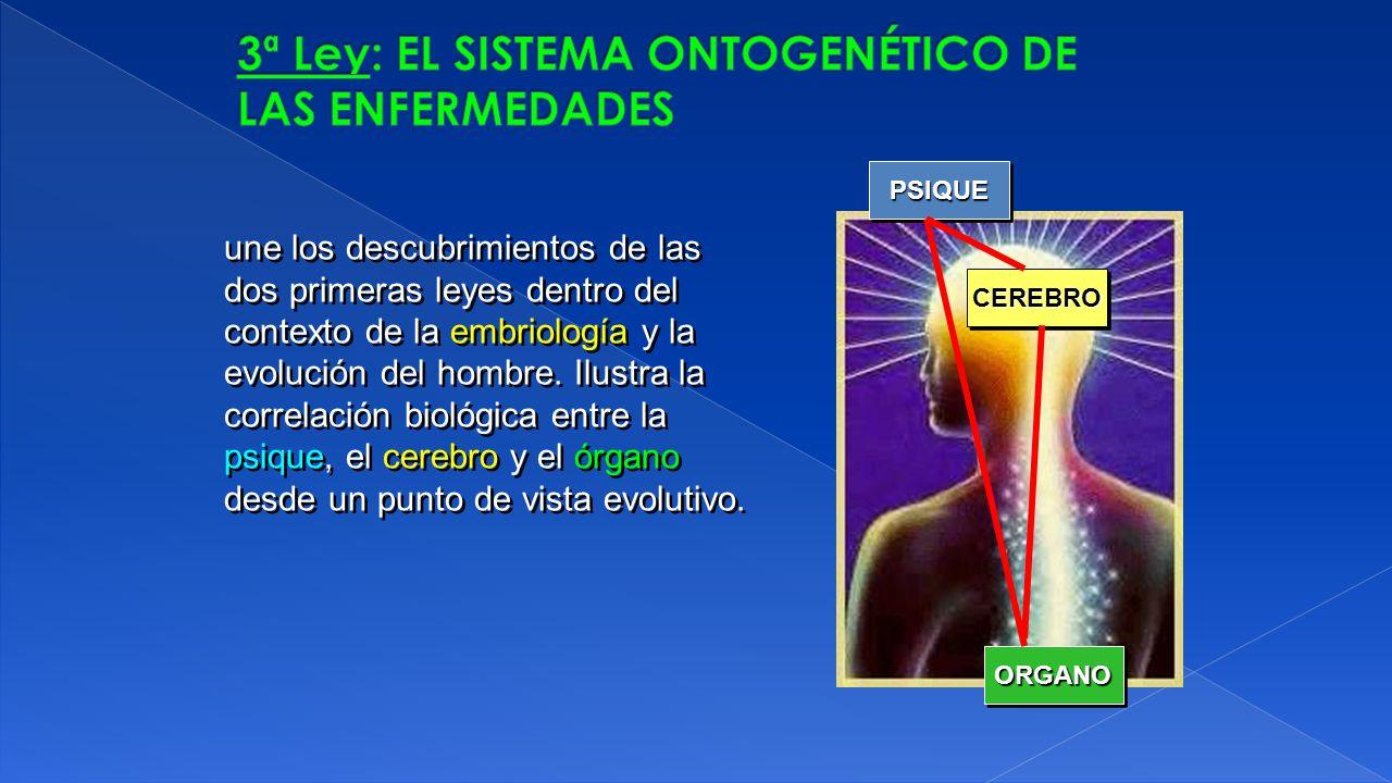 3ª Ley: EL SISTEMA ONTOGENÉTICO DE LAS ENFERMEDADES