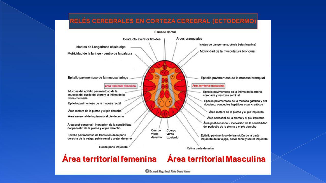Área territorial femenina Área territorial Masculina