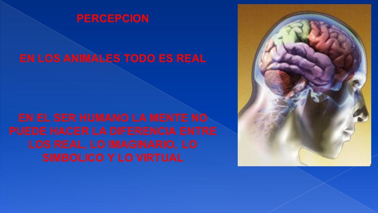EN LOS ANIMALES TODO ES REAL