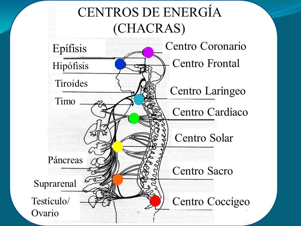 CENTROS DE ENERGÍA (CHACRAS)