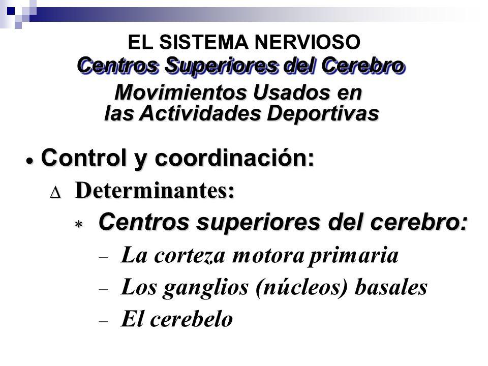 Centros Superiores del Cerebro las Actividades Deportivas
