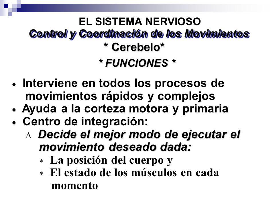Control y Coordinación de los Movimientos