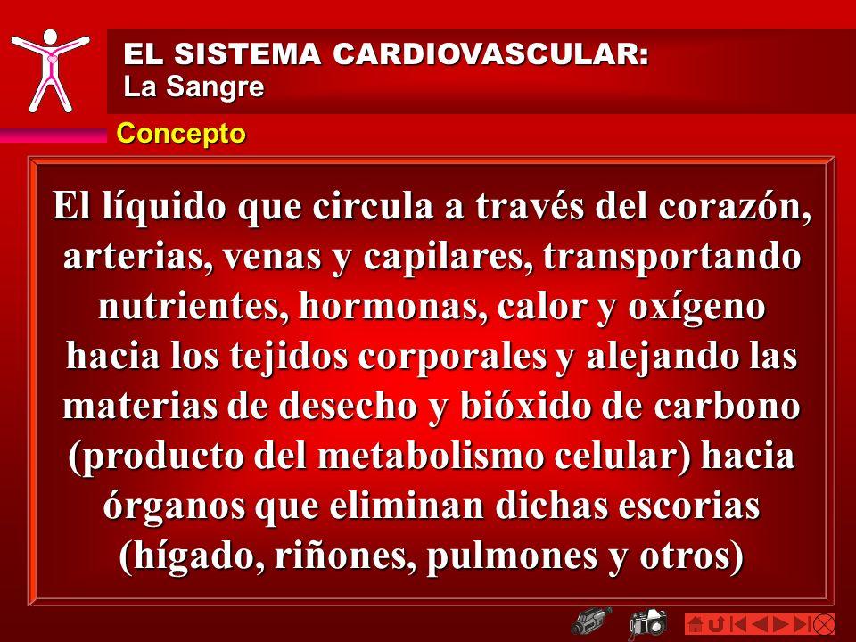EL SISTEMA CARDIOVASCULAR: