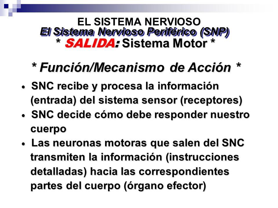 * Función/Mecanismo de Acción *