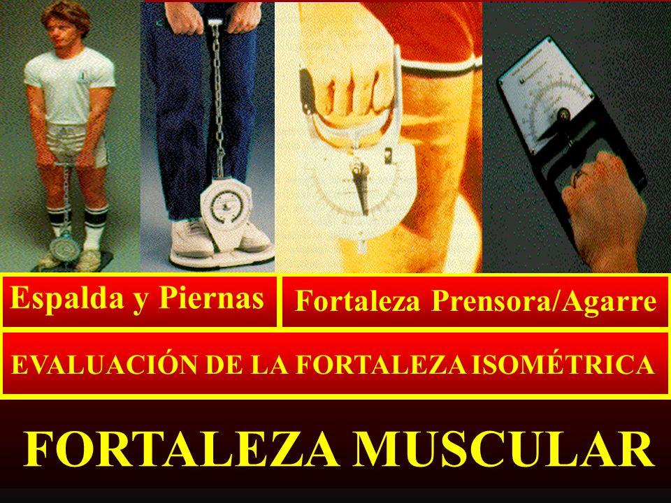 Fortaleza Prensora/Agarre EVALUACIÓN DE LA FORTALEZA ISOMÉTRICA