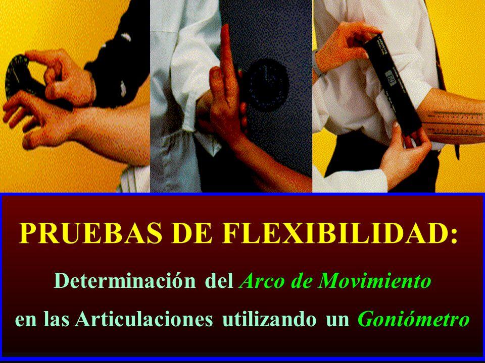 PRUEBAS DE FLEXIBILIDAD: