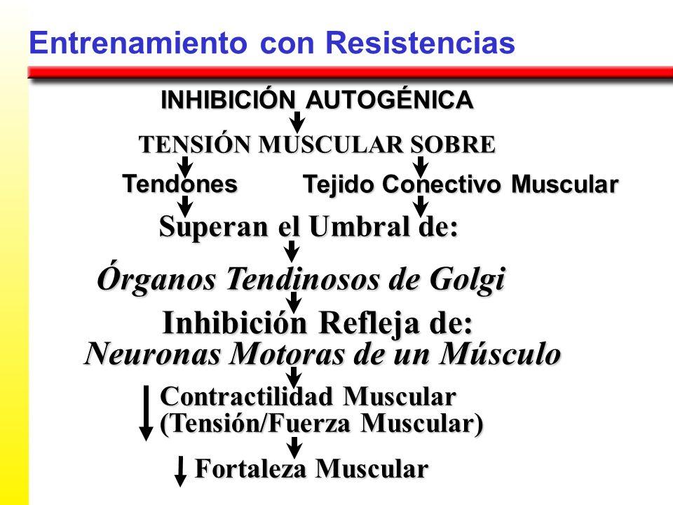 Órganos Tendinosos de Golgi Inhibición Refleja de: