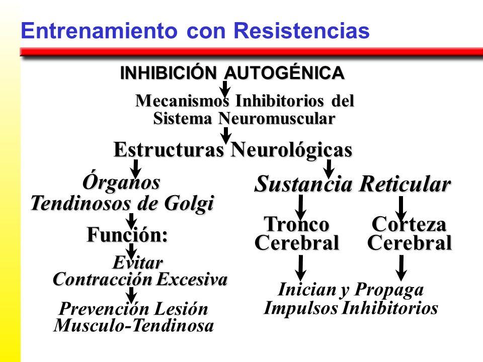 Sustancia Reticular Entrenamiento con Resistencias