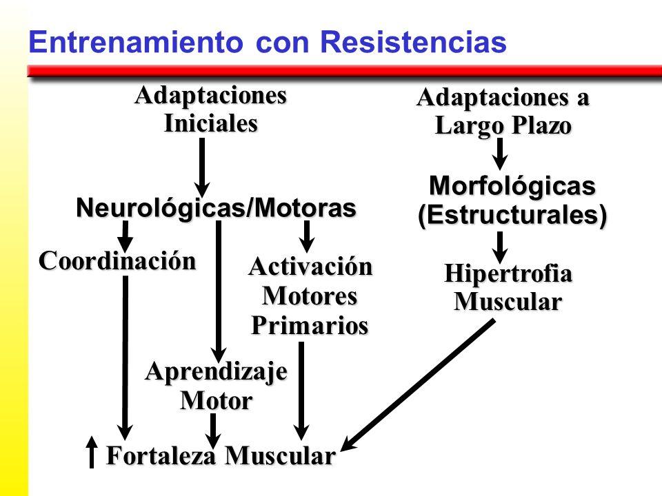 Adaptaciones Iniciales Adaptaciones a Largo Plazo Neurológicas/Motoras