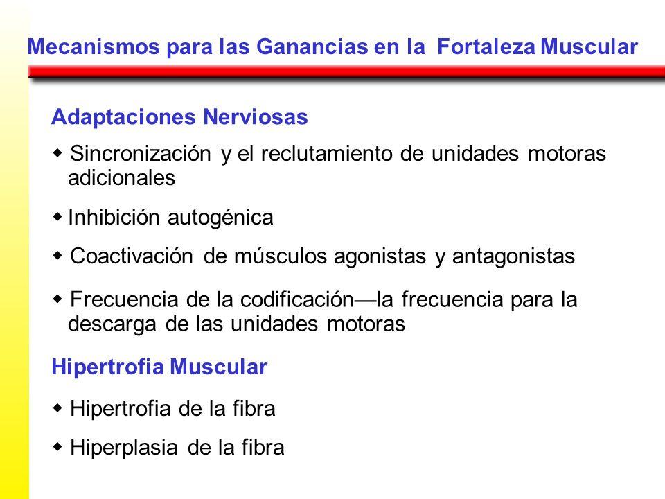 Mecanismos para las Ganancias en la Fortaleza Muscular