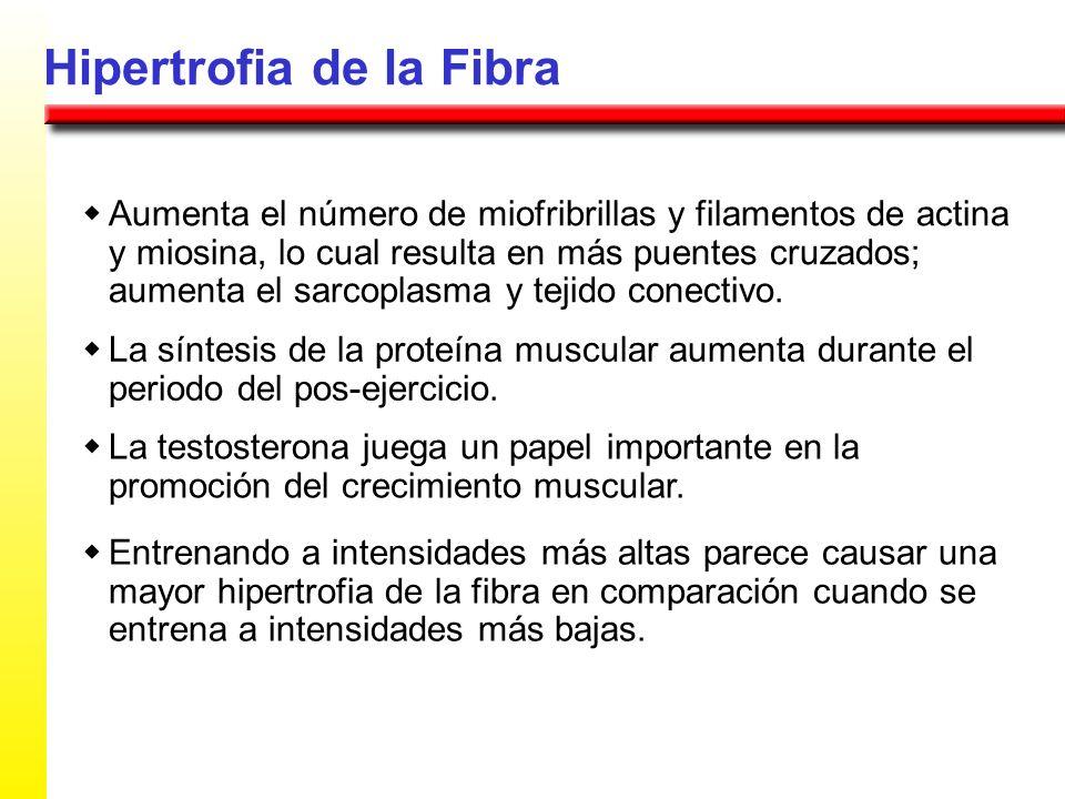 Hipertrofia de la Fibra