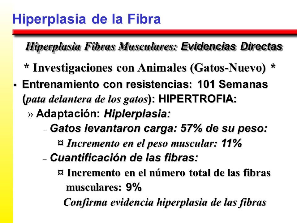 * Investigaciones con Animales (Gatos-Nuevo) *