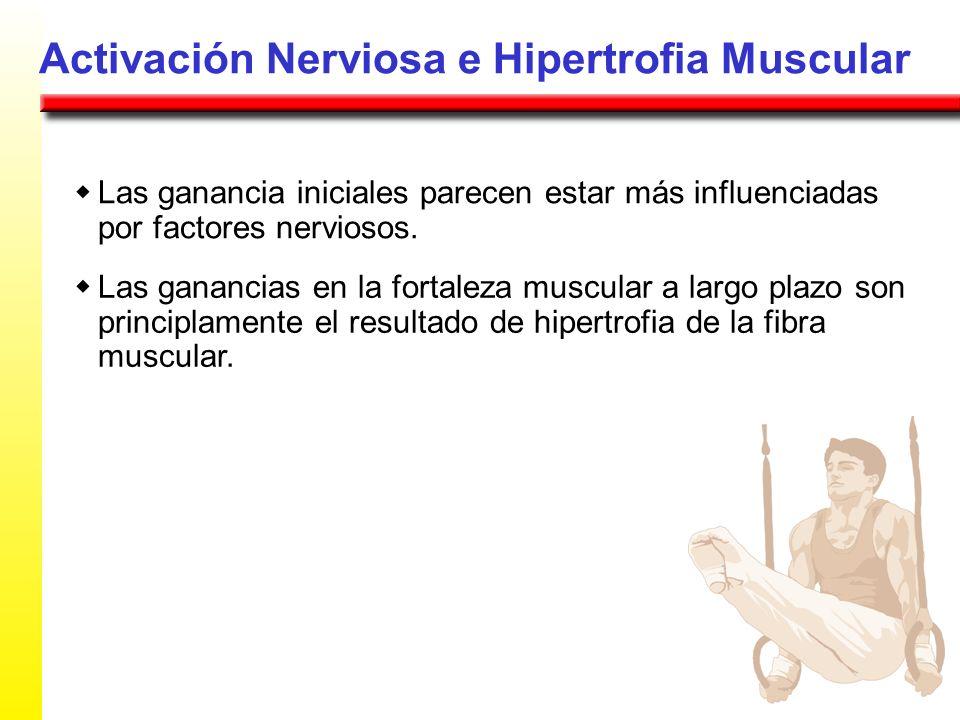 Activación Nerviosa e Hipertrofia Muscular