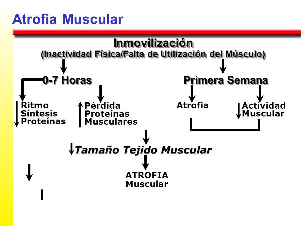 (Inactividad Física/Falta de Utilización del Músculo)