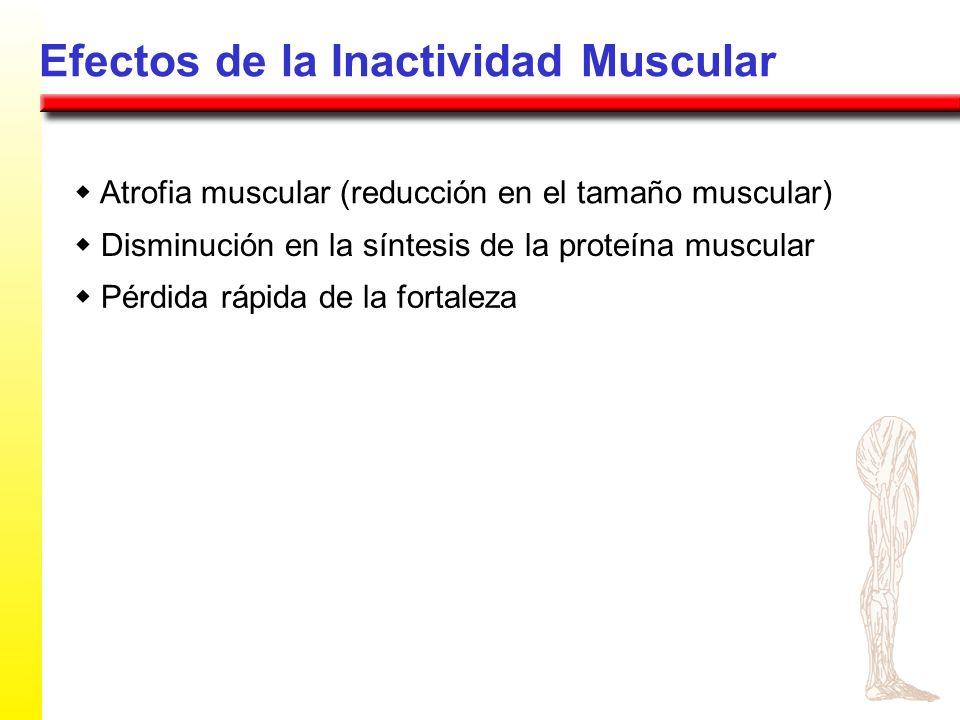 Efectos de la Inactividad Muscular