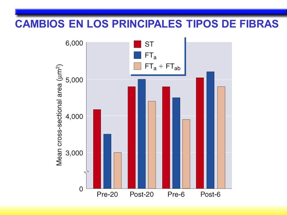 CAMBIOS EN LOS PRINCIPALES TIPOS DE FIBRAS