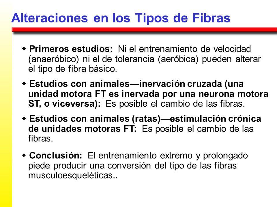 Alteraciones en los Tipos de Fibras