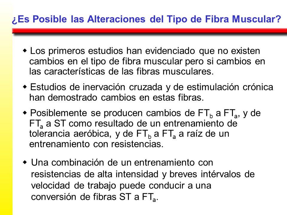 ¿Es Posible las Alteraciones del Tipo de Fibra Muscular
