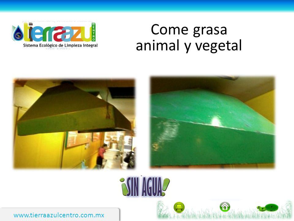 Come grasa animal y vegetal