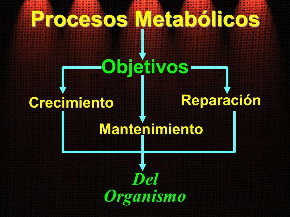 Procesos Metabólicos Objetivos Del Organismo Reparación Crecimiento
