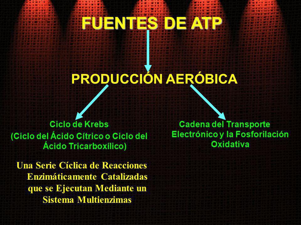 FUENTES DE ATP PRODUCCIÓN AERÓBICA