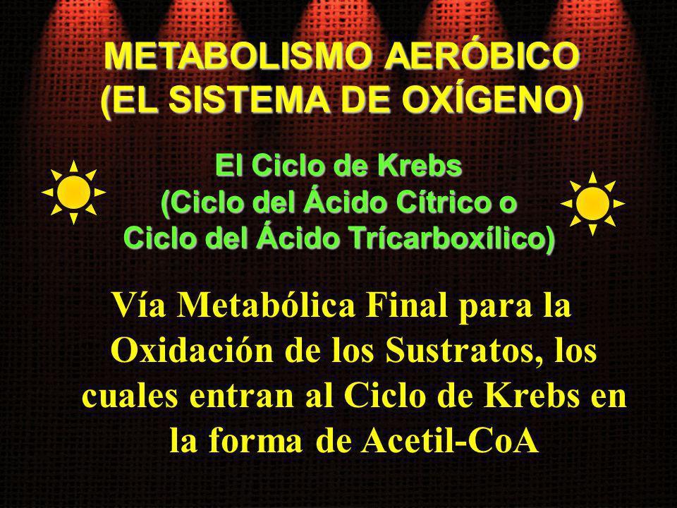 METABOLISMO AERÓBICO (EL SISTEMA DE OXÍGENO) El Ciclo de Krebs. (Ciclo del Ácido Cítrico o. Ciclo del Ácido Trícarboxílico)