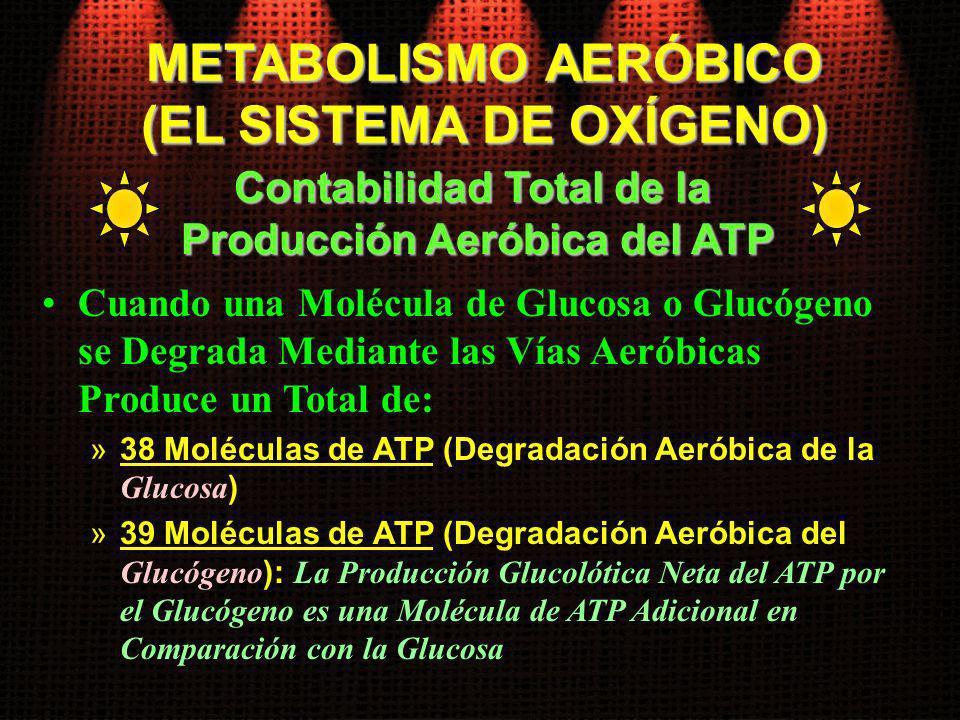 METABOLISMO AERÓBICO (EL SISTEMA DE OXÍGENO)