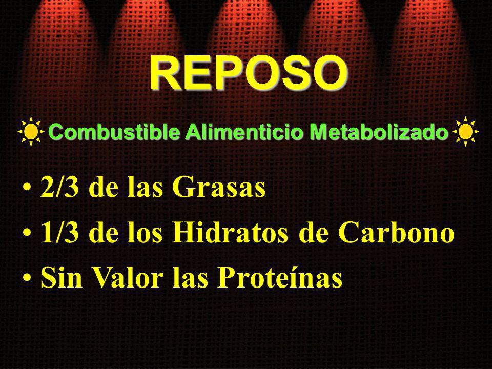 Combustible Alimenticio Metabolizado