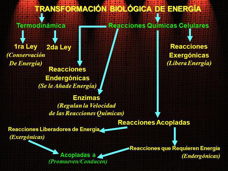 TRANSFORMACIÓN BIOLÓGICA DE ENERGÍA