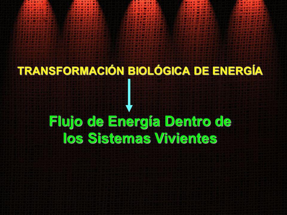 Flujo de Energía Dentro de los Sistemas Vivientes