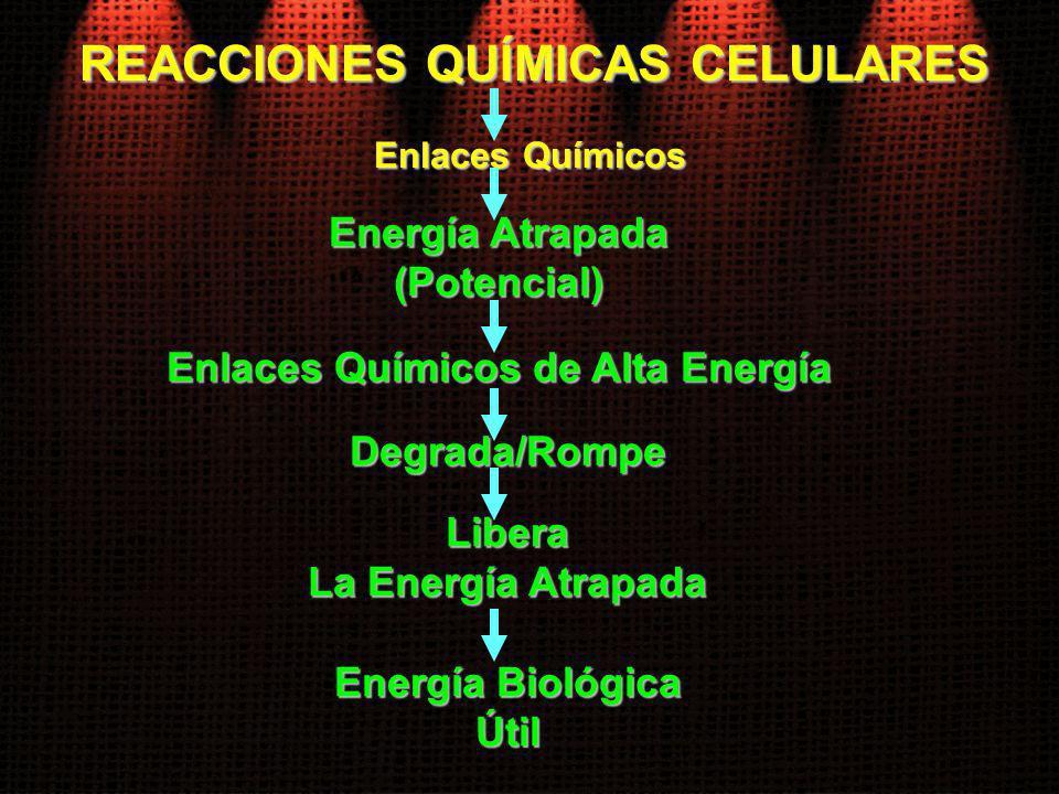 REACCIONES QUÍMICAS CELULARES Enlaces Químicos de Alta Energía