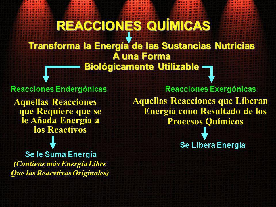 REACCIONES QUÍMICAS Transforma la Energía de las Sustancias Nutricias