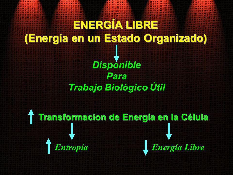 ENERGÍA LIBRE (Energía en un Estado Organizado)