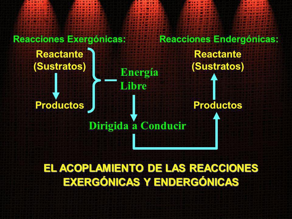 Energía Libre EL ACOPLAMIENTO DE LAS REACCIONES