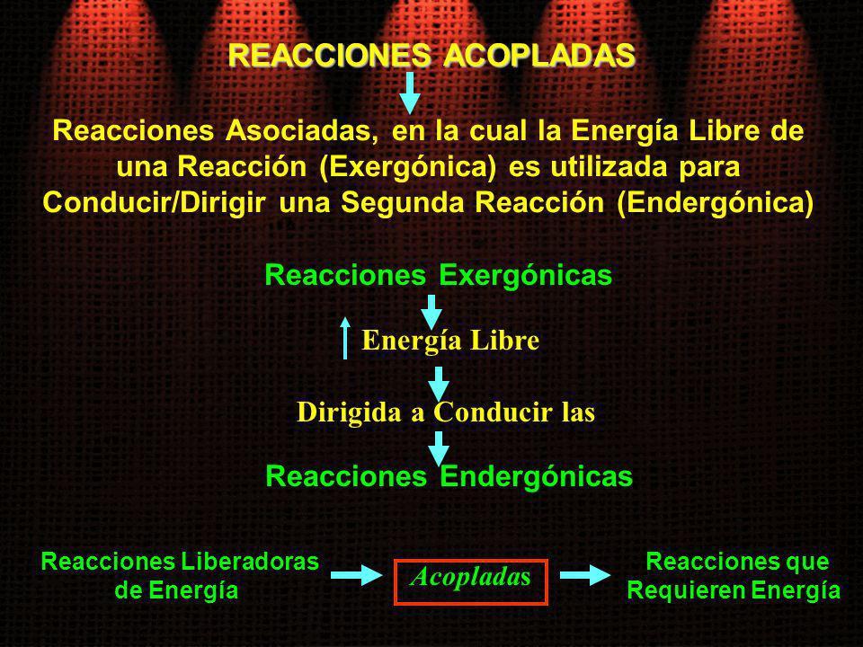 Reacciones Exergónicas Reacciones Endergónicas Reacciones Liberadoras