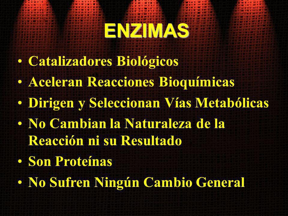ENZIMAS Catalizadores Biológicos Aceleran Reacciones Bioquímicas