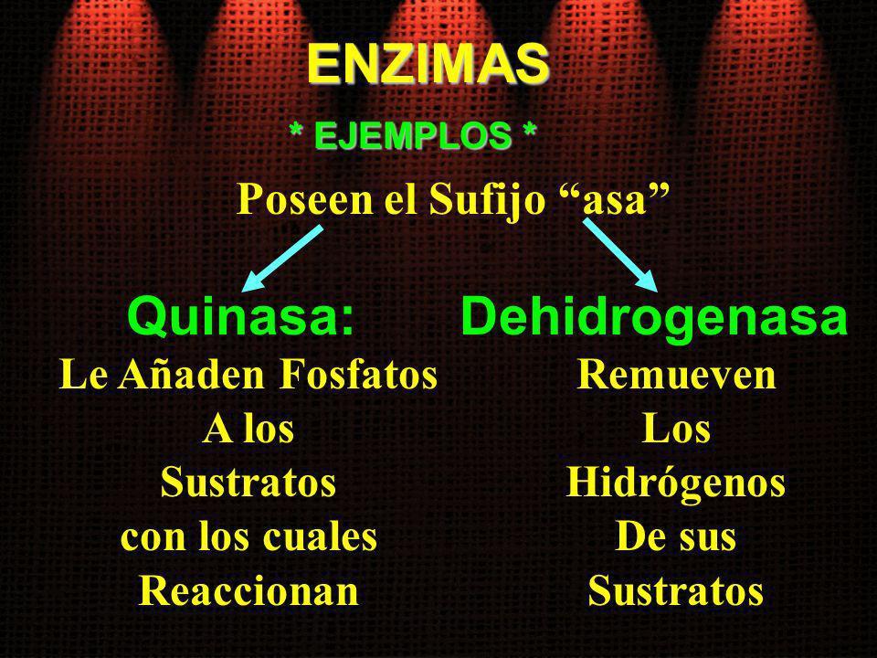 ENZIMAS Quinasa: Dehidrogenasa Poseen el Sufijo asa