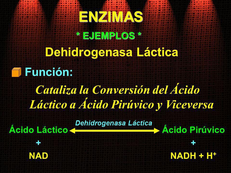 ENZIMAS Dehidrogenasa Láctica