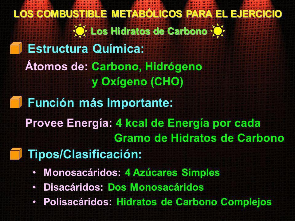 LOS COMBUSTIBLE METABÓLICOS PARA EL EJERCICIO Los Hidratos de Carbono