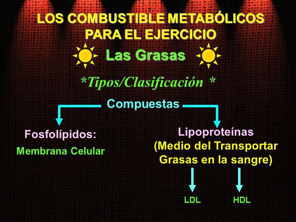 *Tipos/Clasificación *