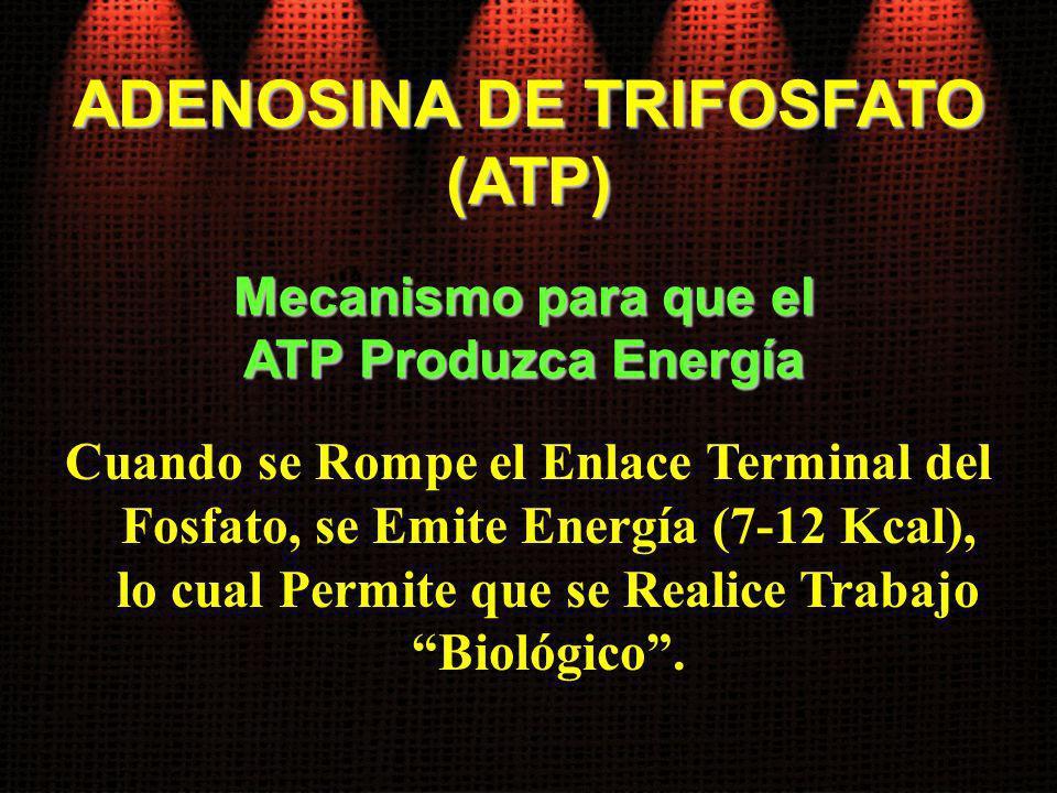 ADENOSINA DE TRIFOSFATO Mecanismo para que el ATP Produzca Energía