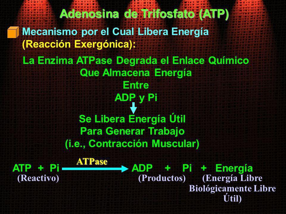 Adenosina de Trifosfato (ATP)