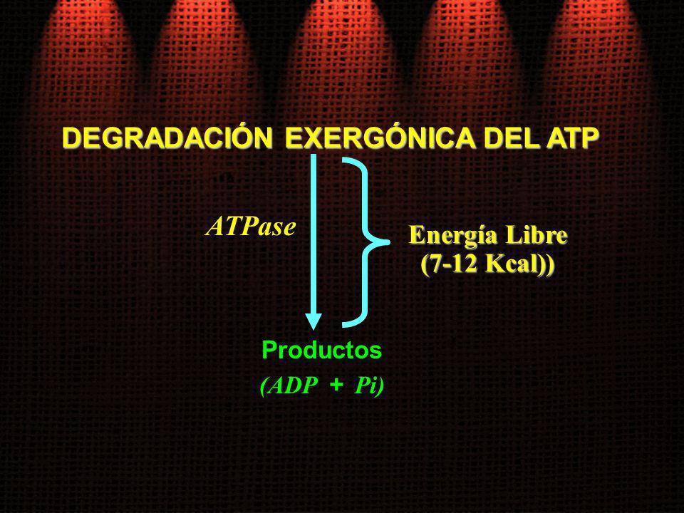 DEGRADACIÓN EXERGÓNICA DEL ATP