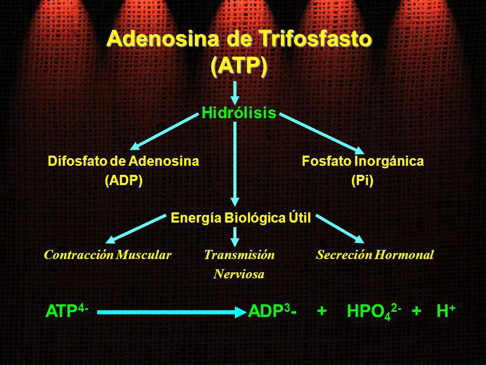 Adenosina de Trifosfasto Difosfato de Adenosina Energía Biológica Útil