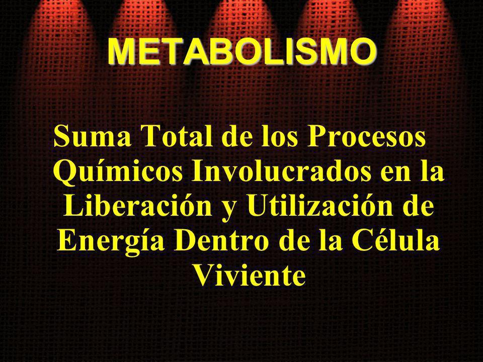 METABOLISMO Suma Total de los Procesos Químicos Involucrados en la Liberación y Utilización de Energía Dentro de la Célula Viviente.