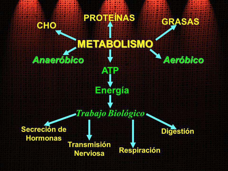 METABOLISMO Anaeróbico Aeróbico ATP Energía Trabajo Biológico