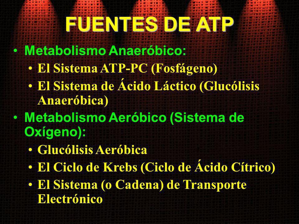 FUENTES DE ATP Metabolismo Anaeróbico: El Sistema ATP-PC (Fosfágeno)