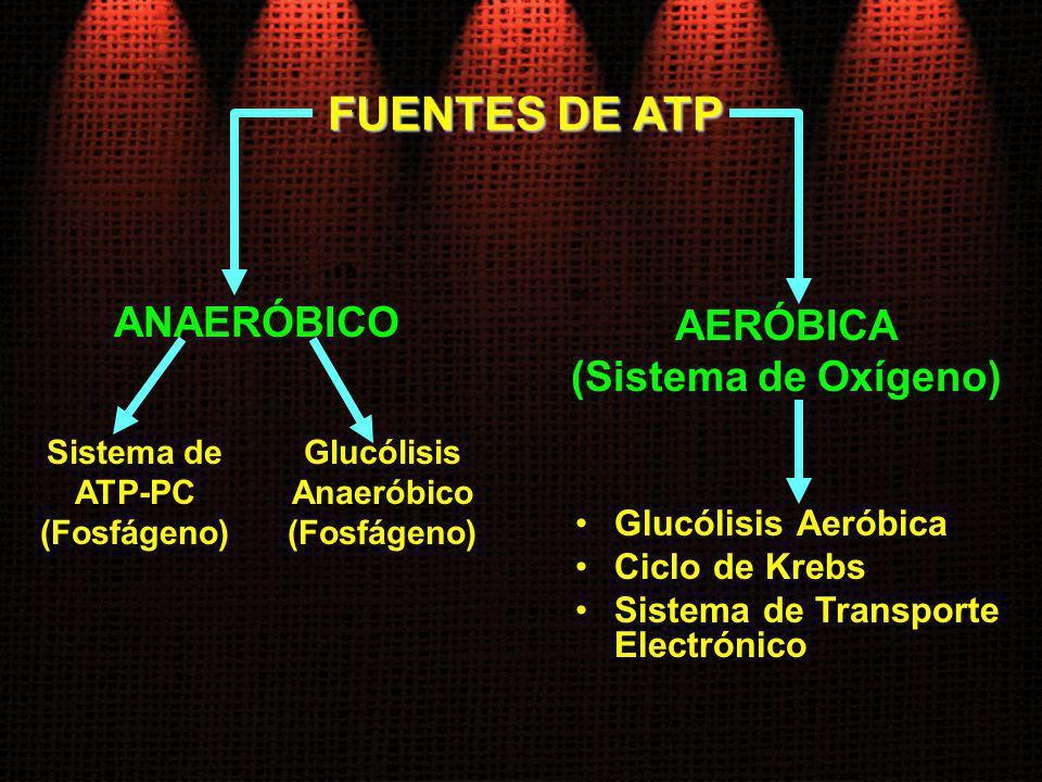FUENTES DE ATP ANAERÓBICO AERÓBICA (Sistema de Oxígeno)