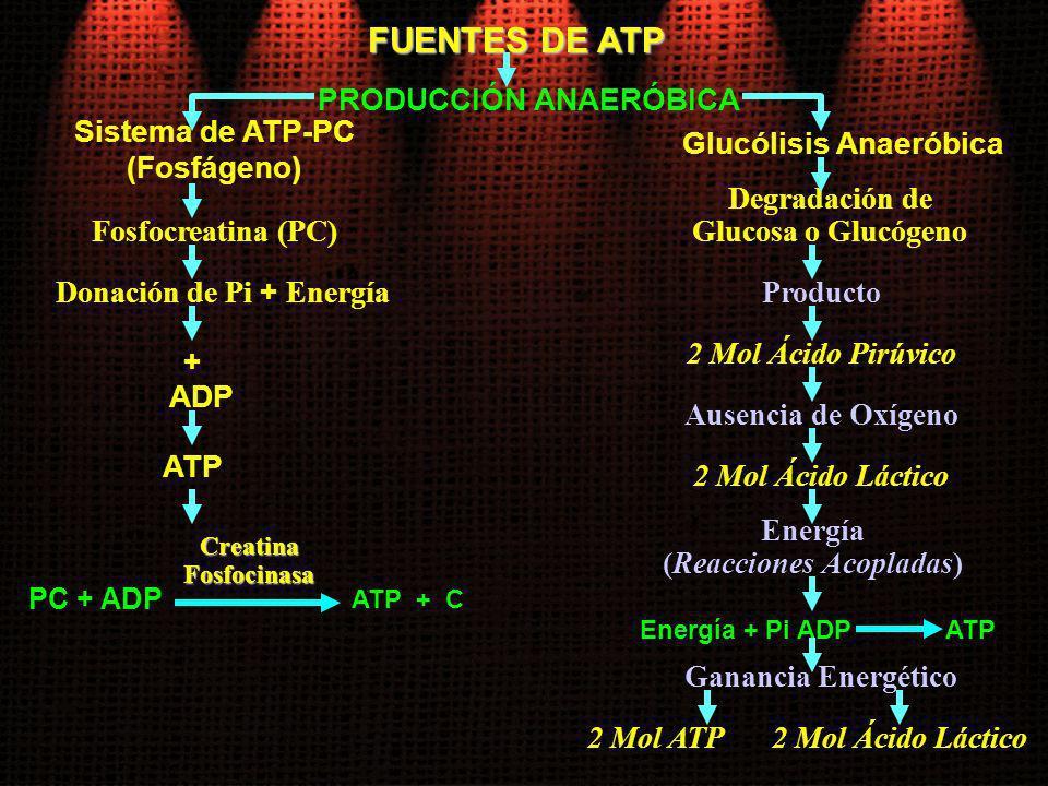 FUENTES DE ATP PRODUCCIÓN ANAERÓBICA Sistema de ATP-PC (Fosfágeno)